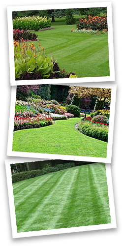 lawn-care-fairhope-al-daphne-al-xtreme-turf-lawn-care