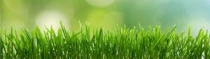 lawn-care-fairhope-al