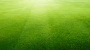 fairhope-alabama-lawn-care