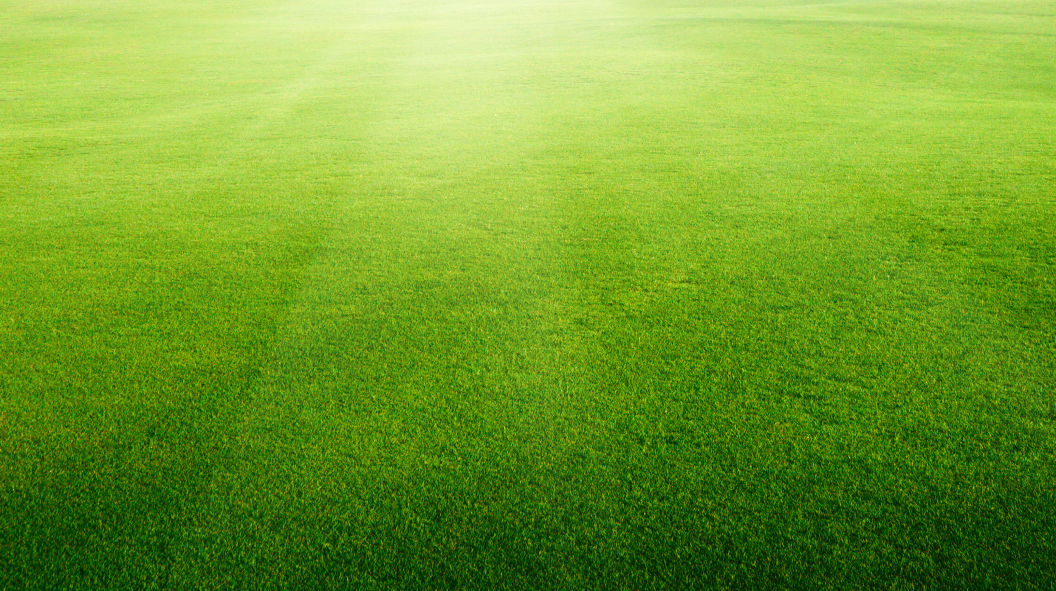 xtreme turf provides lawn care for fairhope  al