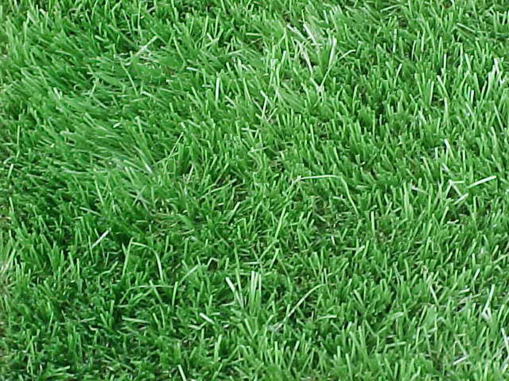 Mobile Al Lawn Care   Selecting Turfgrasses for Home Lawns ...